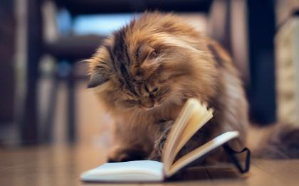 http://ilibridiilaria.myblog.it/wp-content/uploads/sites/321665/2014/08/cats-animals-reading-books-kittens-1920x1200-wallpaper_www.animalhi.com_2.jpg